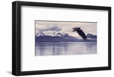 Silent Quest-Daniel Smith-Framed Art Print