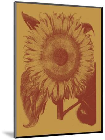Sunflower 15-Botanical Series-Mounted Art Print