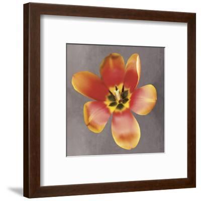 Sunshine Tulip-Erin Clark-Framed Art Print