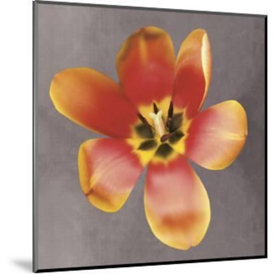 Sunshine Tulip-Erin Clark-Mounted Art Print