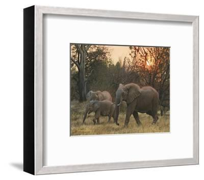 Sundown Elephants-John Mullane-Framed Art Print