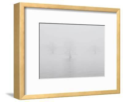 Three Quiet Trees-Derek Jecxz-Framed Art Print