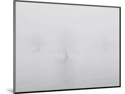 Three Quiet Trees-Derek Jecxz-Mounted Art Print