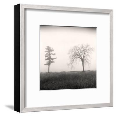 Tree, Study #8-Andrew Ren-Framed Art Print