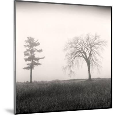 Tree, Study #8-Andrew Ren-Mounted Art Print