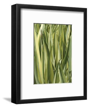 Verigation 1-Jenny Kraft-Framed Art Print