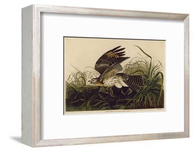 Winter Hawk-John James Audubon-Framed Art Print
