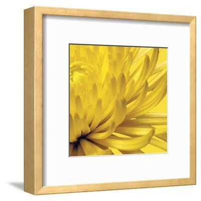 Yellow Mum 2-Jenny Kraft-Framed Art Print