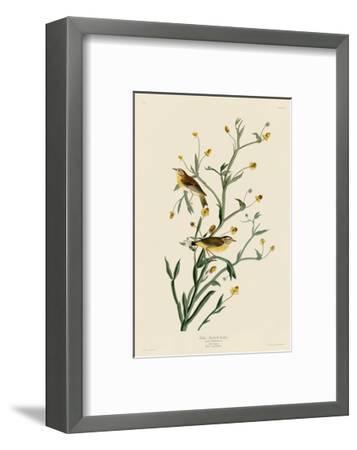 Yellow Red-Poll Warbler-John James Audubon-Framed Art Print