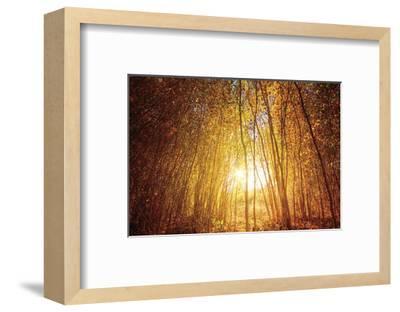 Finding Fall-Bob Larson-Framed Art Print