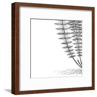 Fern III (on white)-Botanical Series-Framed Art Print