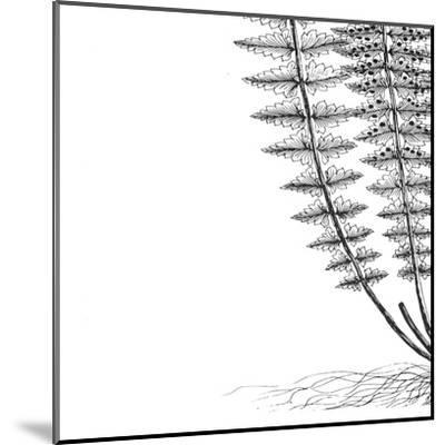 Fern III (on white)-Botanical Series-Mounted Art Print