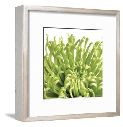 Green Bloom 5 (detail)-Jenny Kraft-Framed Art Print