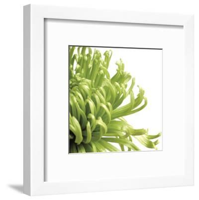 Green Bloom 2 (detail)-Jenny Kraft-Framed Art Print