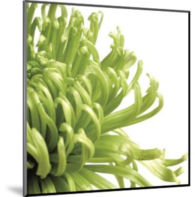 Green Bloom 2 (detail)-Jenny Kraft-Mounted Art Print