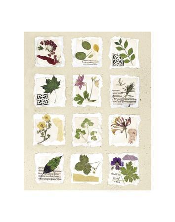 Kent Garden Fragments-Annabel Hewitt-Framed Art Print