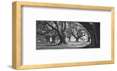 Oak Alley West Row-William Guion-Framed Art Print