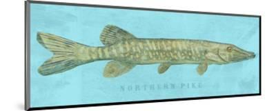 Northern Pike-John W^ Golden-Mounted Art Print