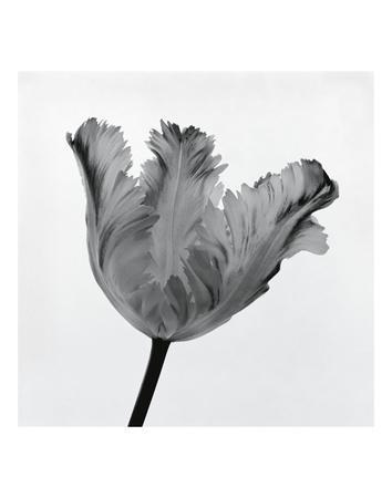 Parrot Tulip I-Tom Artin-Framed Art Print