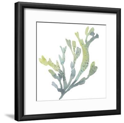Sea Tangle V-Sandra Jacobs-Framed Giclee Print