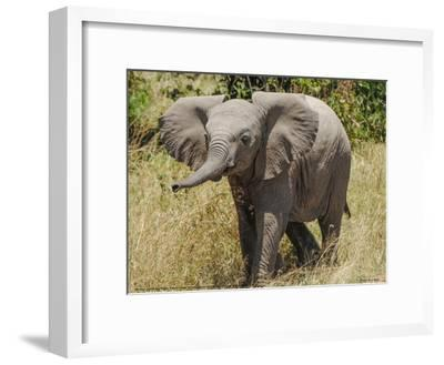 Elephant Calf Trumpet Full Bleed-Martin Fowkes-Framed Giclee Print
