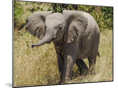 Elephant Calf Trumpet Full Bleed-Martin Fowkes-Mounted Giclee Print