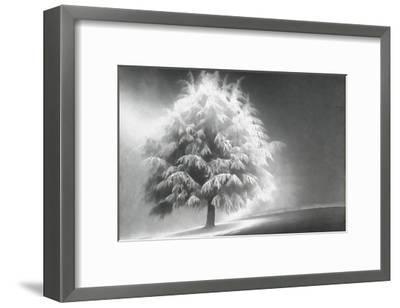Schwartz - Enlightened Tree-Don Schwartz-Framed Premium Giclee Print