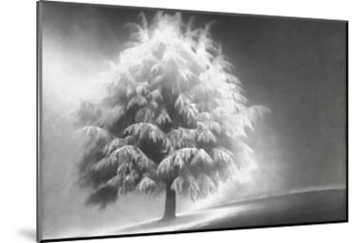 Schwartz - Enlightened Tree-Don Schwartz-Mounted Premium Giclee Print