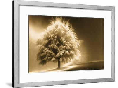 Schwartz - Enlightened Tree-Don Schwartz-Framed Art Print