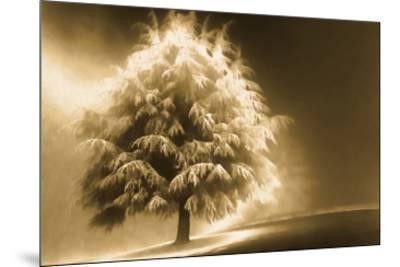 Schwartz - Enlightened Tree-Don Schwartz-Mounted Art Print