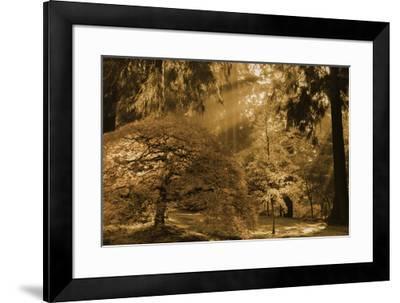 Schwartz - Bathed in Morning Light-Don Schwartz-Framed Art Print