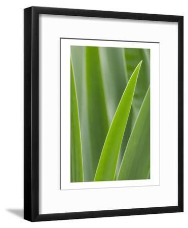 Schwartz - Blades of Green-Don Schwartz-Framed Art Print