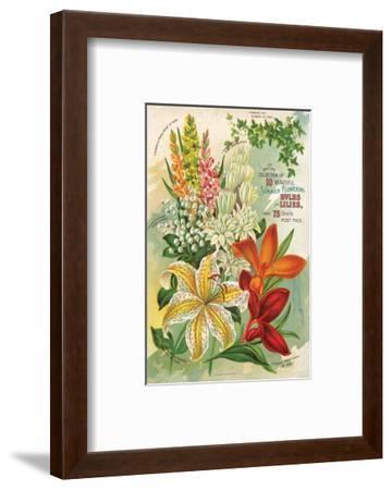 Summer Flowering Bulbs &Lilies--Framed Art Print