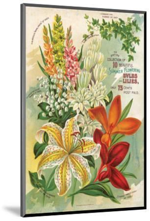 Summer Flowering Bulbs &Lilies--Mounted Art Print