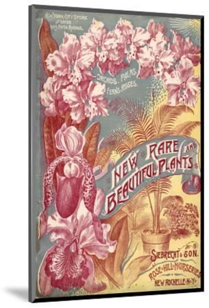Seibrecht Plants New Rochelle--Mounted Art Print