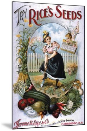 Try Rice's Seeds Cambridge--Mounted Art Print