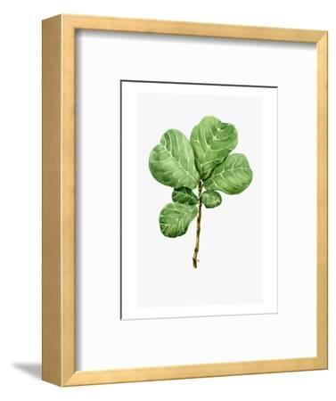 Watercolor Ficus Branch--Framed Art Print