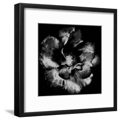 Black Garden-Sheldon Lewis-Framed Art Print