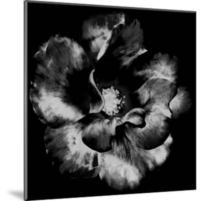 Black Garden-Sheldon Lewis-Mounted Art Print