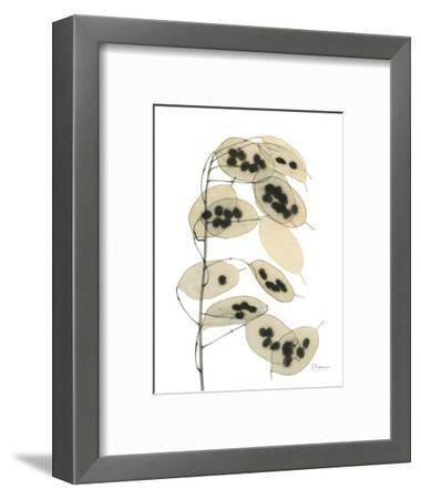 Honesty Seed Pod-Albert Koetsier-Framed Art Print