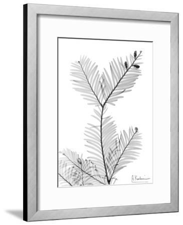 Sequoia Branch-Albert Koetsier-Framed Art Print