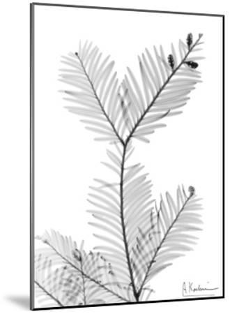 Sequoia Branch-Albert Koetsier-Mounted Art Print