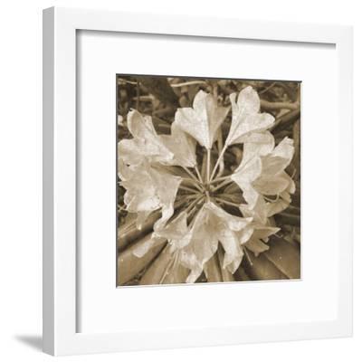 Flower Aroma-Sheldon Lewis-Framed Art Print