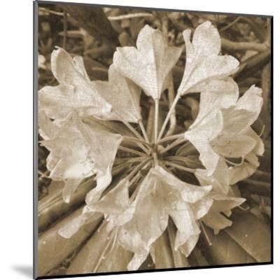 Flower Aroma-Sheldon Lewis-Mounted Art Print