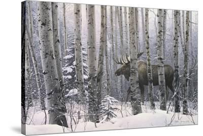 A Walk in the Woods-Stephen Lyman-Stretched Canvas Print