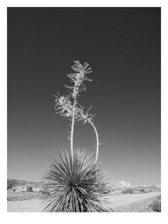 Road Trip #4-Murray Bolesta-Framed Art Print