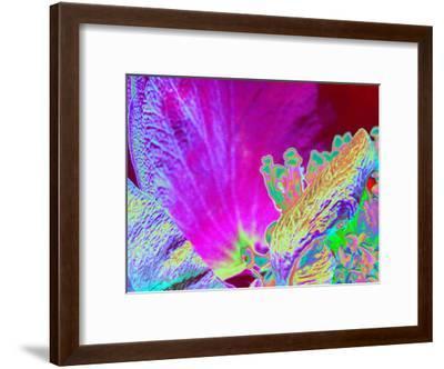 Neon Rose 1-Rose Anne Colavito-Framed Art Print