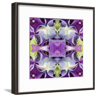 Hydrangea3-Rose Anne Colavito-Framed Art Print