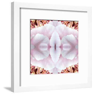 Pink Peony-Rose Anne Colavito-Framed Art Print