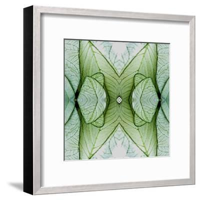 White Caladium 3-Rose Anne Colavito-Framed Art Print